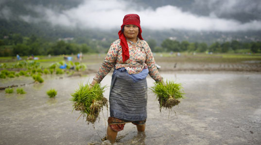 Female farmers in the developing world will bear the most severe impacts of climate change. (Reuters/Navesh Chitrakar)